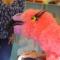 Lezen_Oke!_Flaminga_007