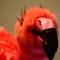Lezen_Oke!_Flaminga_030